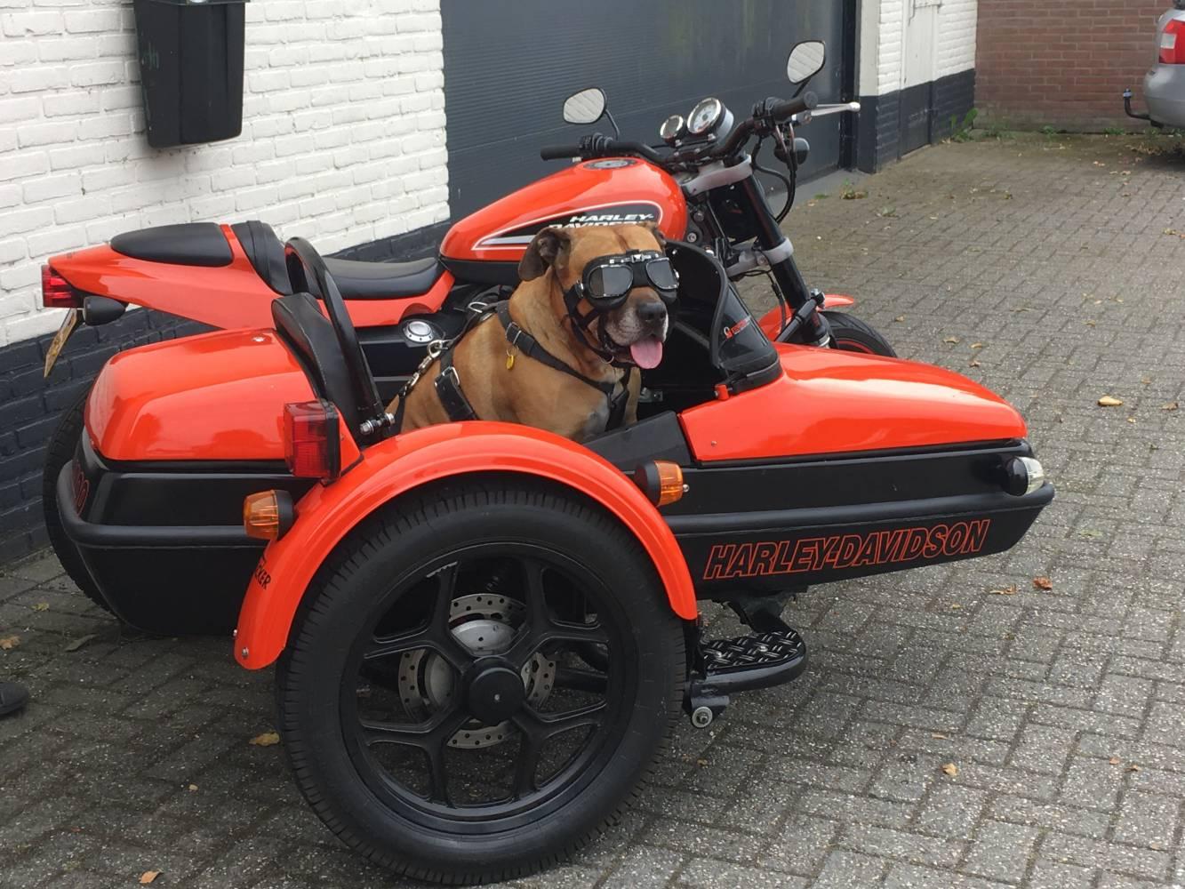Zijspan_met_hond.jpg